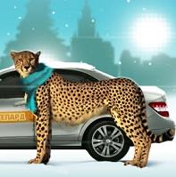 1362002439_taksi-gepard